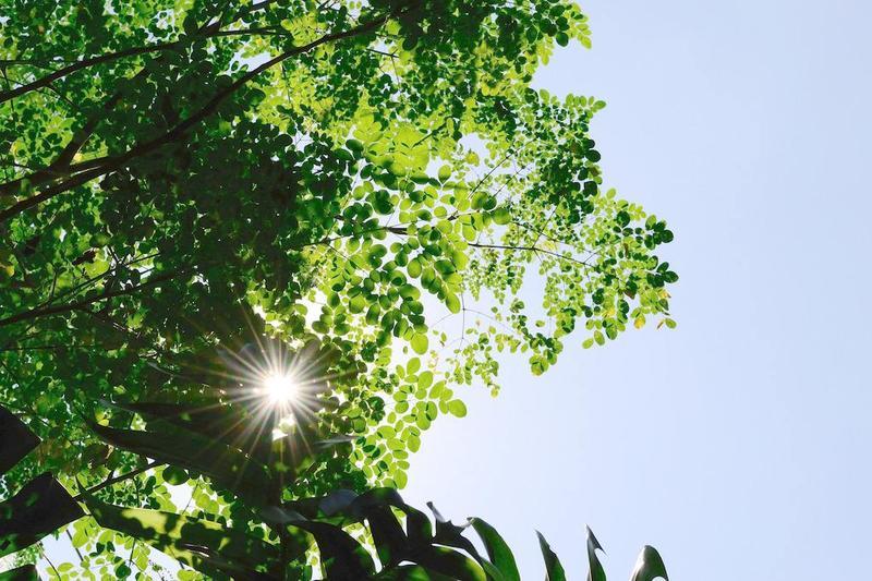 阳光2.jpg