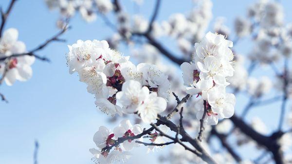 春6.jpg