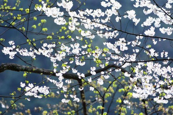 春分3.jpg